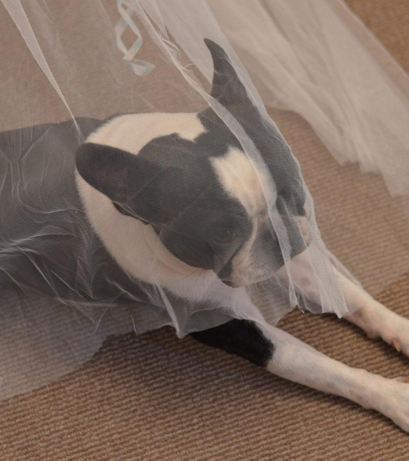 pas-vjencanje-royal-bride-03